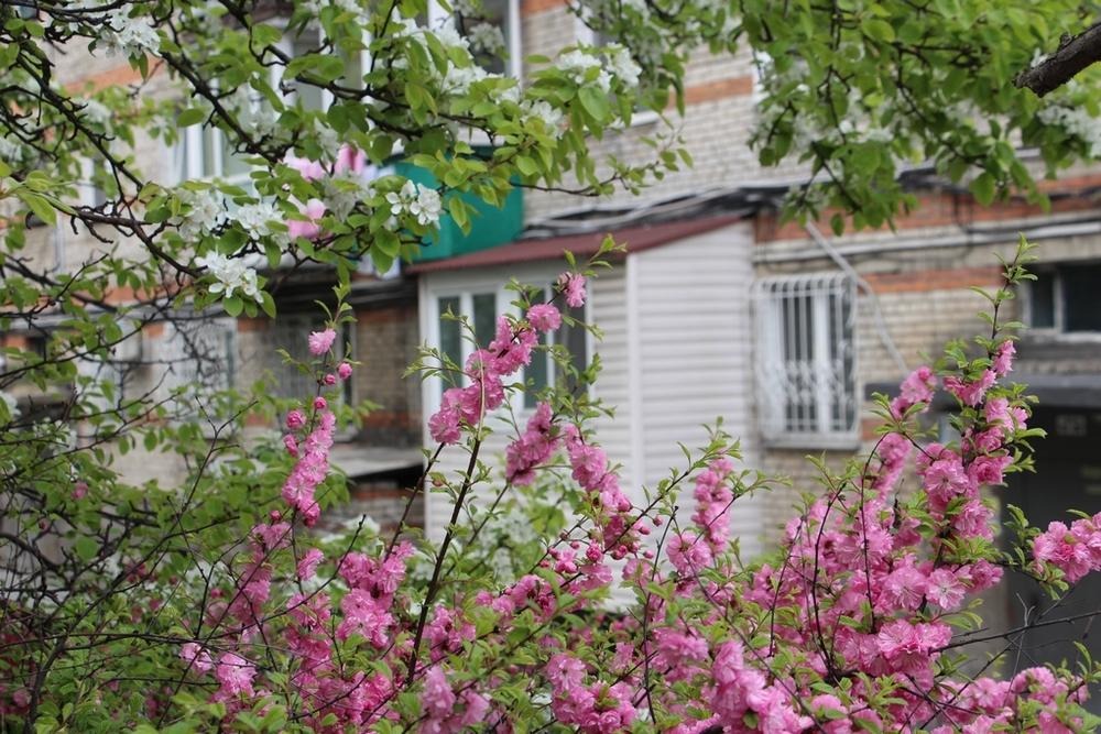 Фото: «Уютное гнездышко, дом милый дом» - вы только так и станете называть эту уютную трехкомнатную квартиру, если вам посчастливится поселиться здесь