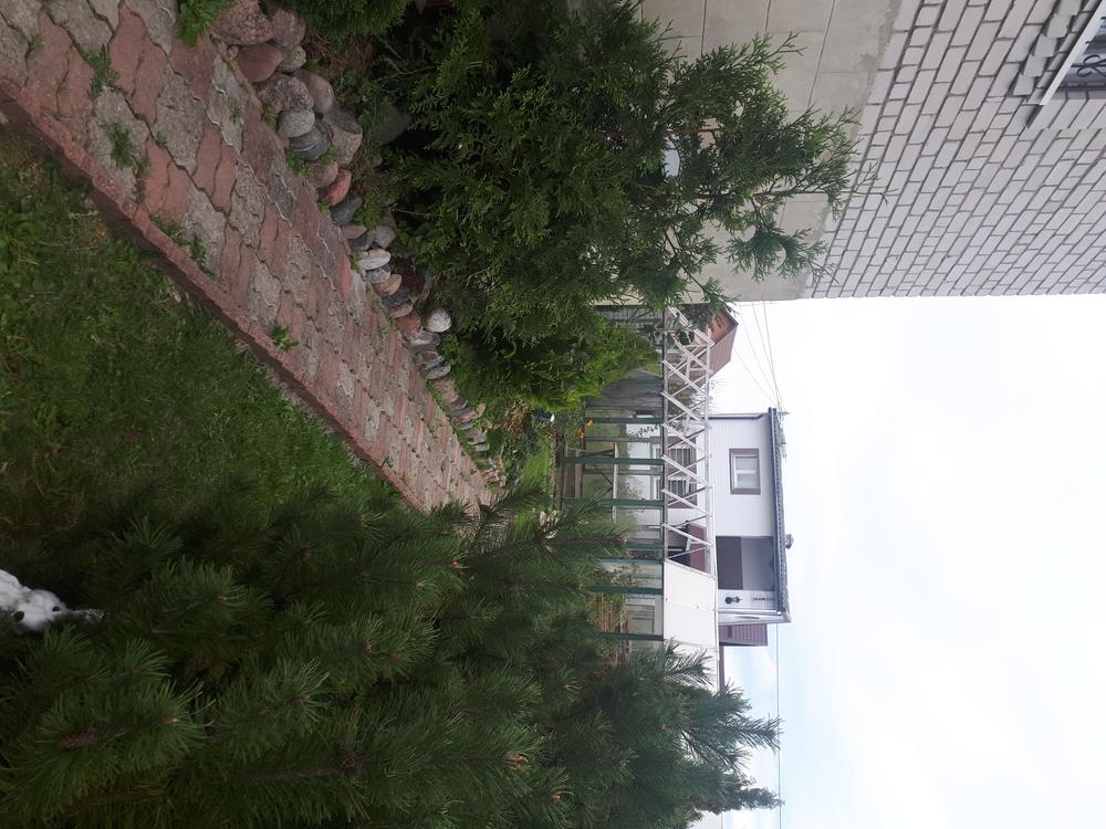 Калининградская область, Район Зеленоградский, Сокольники, 38 4