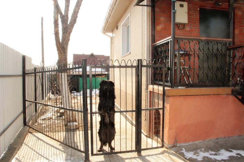 Фото: Два отдельно стоящих дома на одном участке