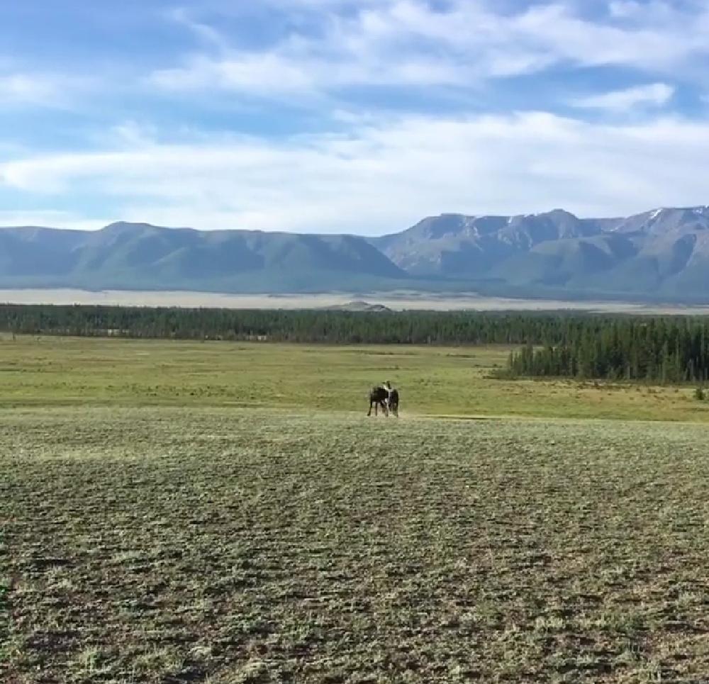 Купить земельный участок: с Усть-Кокса, Респ Алтай